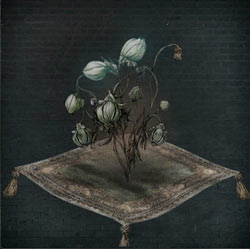 Bulbo de flor de sangre fría