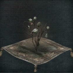 Plántula de flor de sangre fría