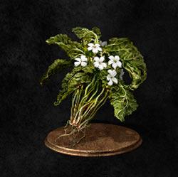 Flor verde en cierne