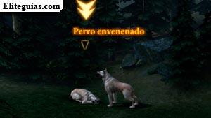 Perro envenenado
