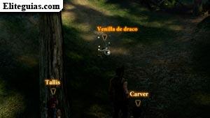 Venilla de draco
