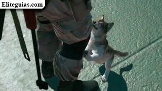 D-Dog cachorro